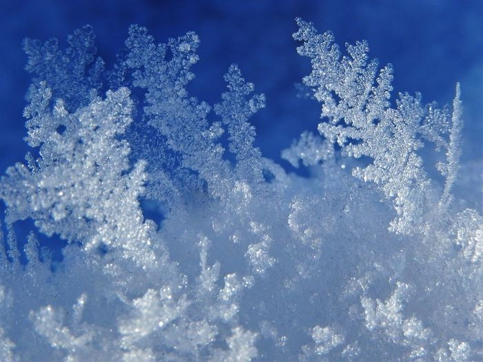 snow crystals Abstract Background Beauty In Nature Blue Close-up Cold Temperature Day Frost Frozen Ice Ice Crystal Macro Nature No People Outdoors Sky Snow Snowcristals  Snowcrystal Snowflake Snowflakes Snowing Weather White Color Winter