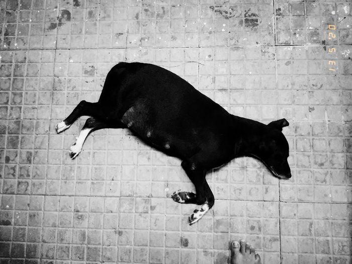 Black dog against wall