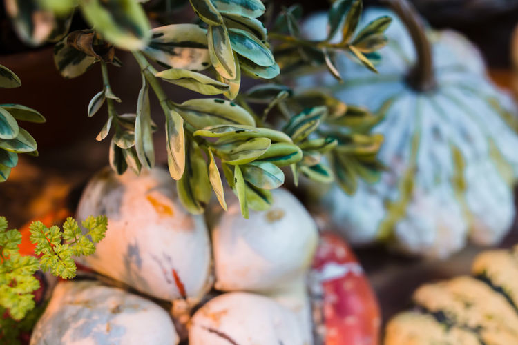 Autumn Buxus Sempervirens Eco Market Vegetarian Food Boxwood Close-up Food Food And Drink For Sale Freshness Greenery Harvest Healthy Eating Leaves Nature No People Pumpkin Squash - Vegetable Variety Vegetable