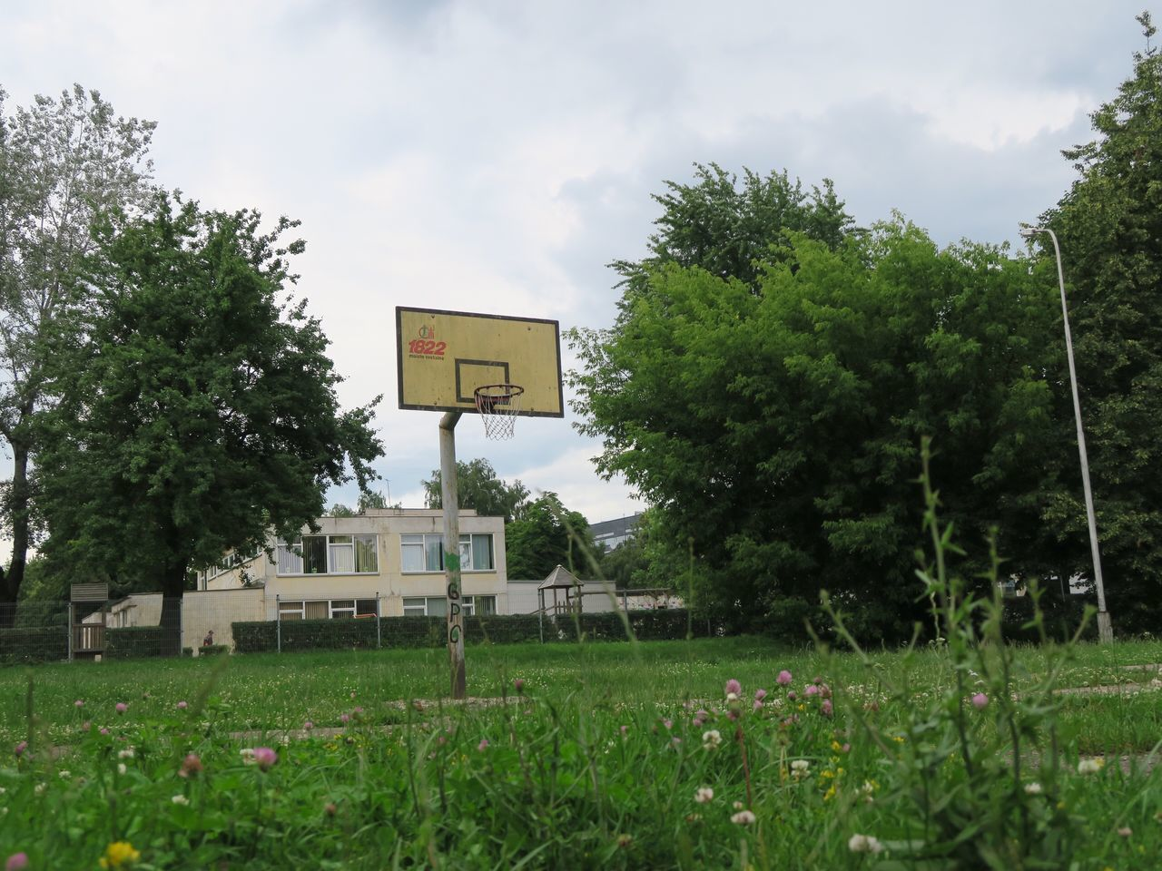 tree, green color, day, sky, growth, outdoors, grass, sport, no people, cloud - sky, basketball hoop, nature, basketball - sport, court