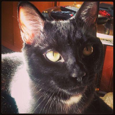 Rocco Douglas Boiler Catoftheday Cataholic Blackcats Instacats Puttanino Catsoninstagram Catsofinstagram Noteveryone