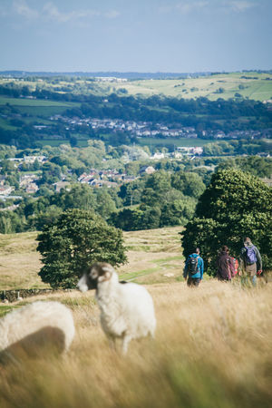 Activity Country Countryside Day Out England Exercise Fitness Fresh Air Healthy Hiking Hills Landscape Moors Nature Otley Outdoors Path People Rambling Sheep Trail Walkers Walking Yorkshire