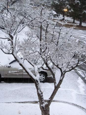 Snow Snowy Tree Los Cruces,New Mexico Parking Lot