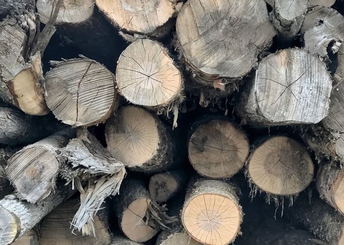 Wood logs. Timber Log Woodpile Full Frame Stack Horizontal Forestry Industry Close-up Growth Rings
