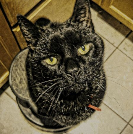 I require a piece of delicious lunchmeat Hooman BLackCat Myblackcat Mycat Blackcatsclub Blackcatsaregood Hi! Hello World Enjoying Life