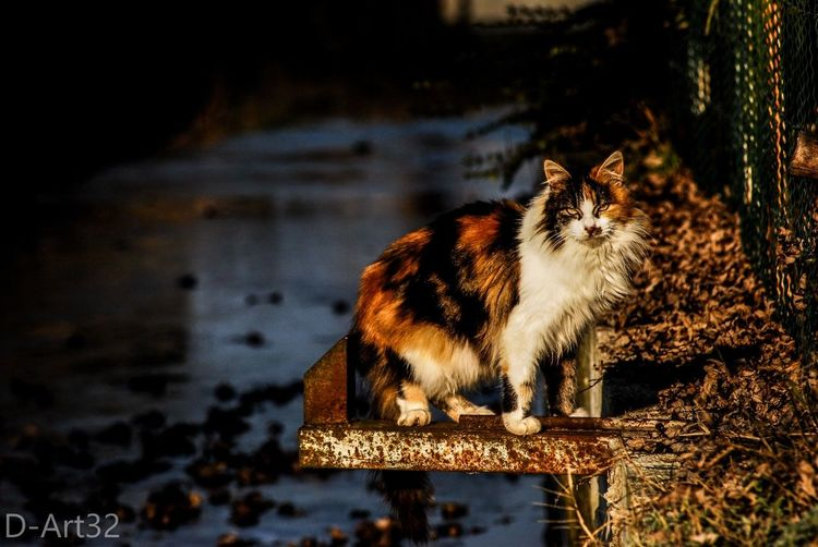 Animal Themes One Animal Domestic Animals Cat Photography Beauty In Nature Beautiful Colors Nikonphotography Nature Tranquility No People
