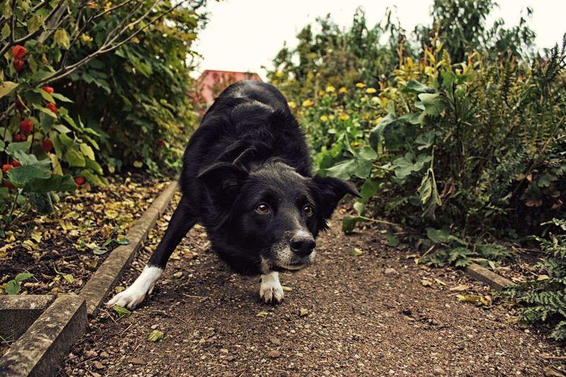 Portrait of dog on plant