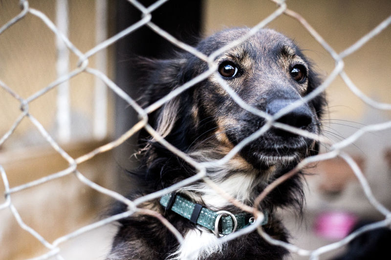 Close-up of dog looking through chainlink fence