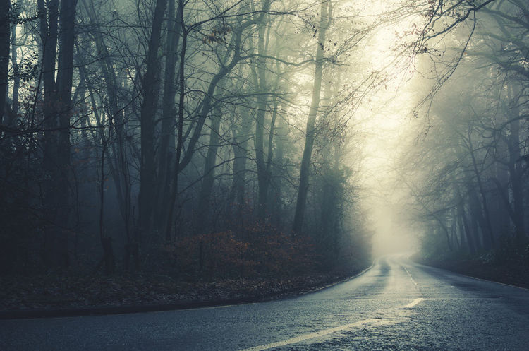 Spooky foggy forest road with the warm glow of the sun in the distance. Background Photography Concept Dawn Dusk English English Countryside Evening Foggy Forest Gloomy Halloween Light Lonely Mist Misty Morning Mysterious Parkland Road Scary Spooky Spooky Trees Trees Wilderness WoodLand