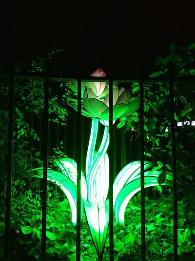 #Light #Flowers #Green Green Color Night Illuminated Built Structure No People Architecture Tree Lighting Equipment Outdoors Plant Nature