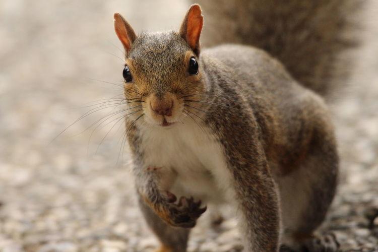 Portrait of squirrel