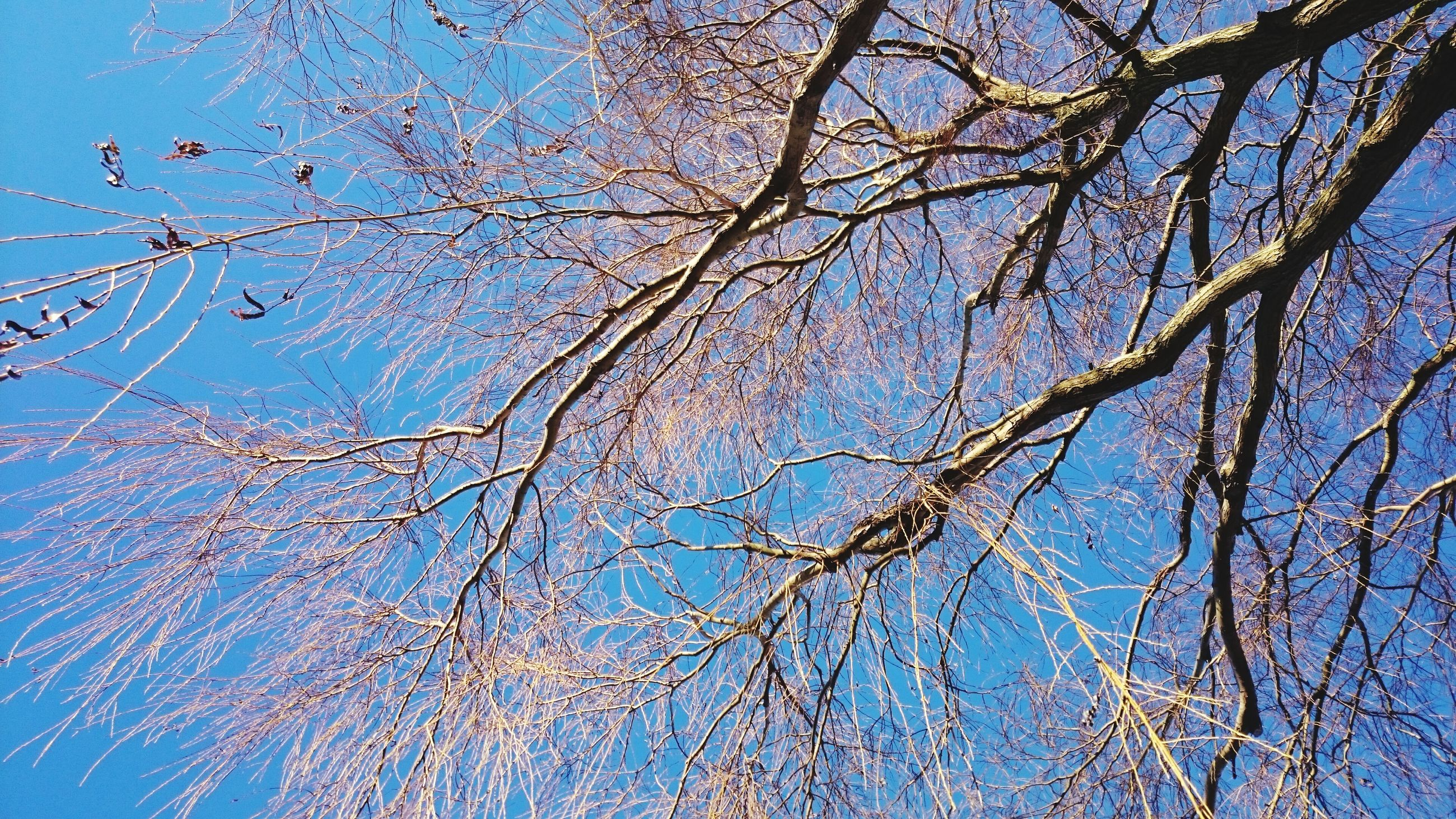 blue, branch, low angle view, bare tree, tree, clear sky, nature, beauty in nature, growth, tranquility, sky, close-up, backgrounds, day, outdoors, full frame, scenics, no people, water, sunlight