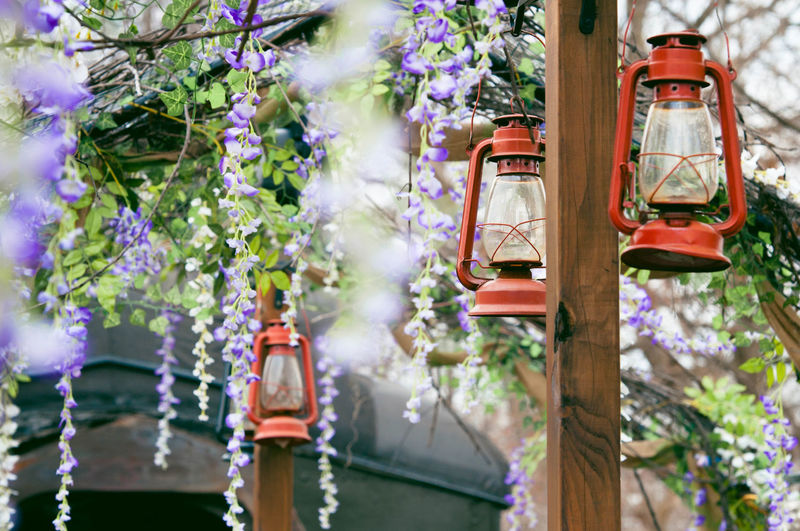 Open Railcar on a Train Decorated for Spring & Easter Decor Lanterns Beauty In Nature Building Exterior Decoration Flower Freshness Hanging Nature No People Outdoors Plant Springtime