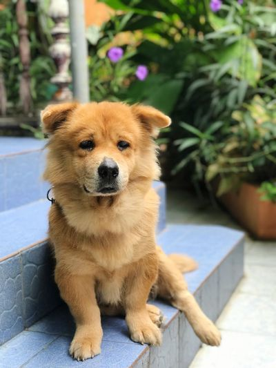Am i sad? Saddog Dog Love One Animal Mammal Animal Themes Animal Dog Canine Vertebrate Pets Portrait Looking Brown Domestic Animals