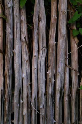 Backgrounds Bamboo - Plant Brown Close-up Day Forest Full Frame Full Length Growth Intertwined Land Natural Pattern Nature No People Outdoors Pattern Plant Plant Part Textured  Tree Tree Trunk Trunk Wood - Material Wooden Texture Wooden Texture Background