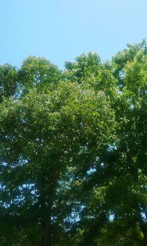 Trees leaves. Nature Leaves🌿 Leaf Trees