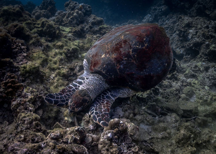 Close-up of turtle on rock