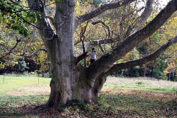 Old Tree. Close