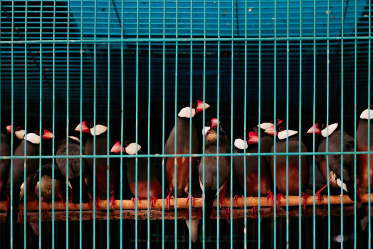 Group Of Animals Day Large Group Of Animals Animal Cage Animal Themes No People Animals In Captivity Animal Wildlife Vertebrate Metal Outdoors Security Nature Birdcage Barrier Boundary Bird Fence Protection Flock Of Birds Bird Market Jakarta Bird Market Traditional Marketplace Traditonal Market Illegal Activity Bird Hunting  Catching Birds Hobbies Hobby Bird Lover