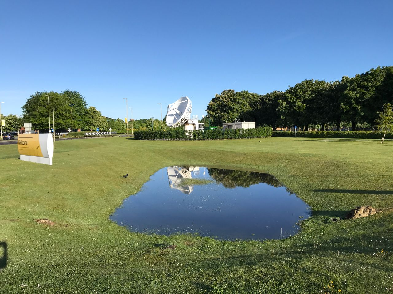 grass, tree, green color, reflection, water, day, nature, outdoors, clear sky, lake, beauty in nature, blue, park - man made space, growth, sunlight, built structure, no people, architecture, golf course, sky, animal themes