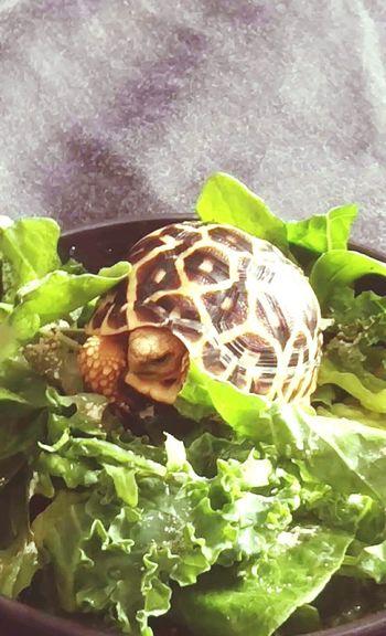 Baby dawn Tortoise Animals
