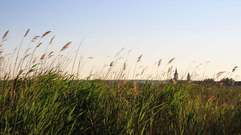 Beauty In Nature Church Clear Sky Day Ear Of Wheat Evening Field Grass Landscape Nature Neusiedlersee No People Outdoors Plant Reed Reeds Rural Scene Rust Scenics Sky Suntset Tranquil Scene Tranquility