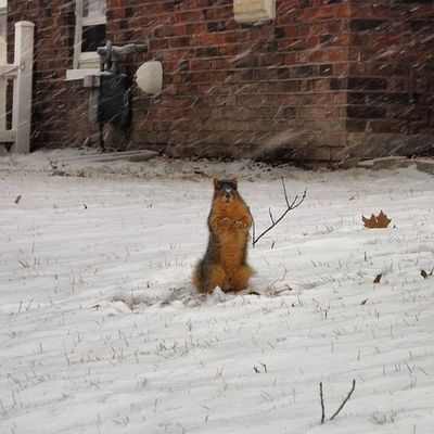 I met this guy today. Squirrel Mizzou Como Snow
