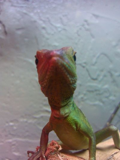 Goodmornin Eyeem Cheese! Reptile Lizard Love Mylizard