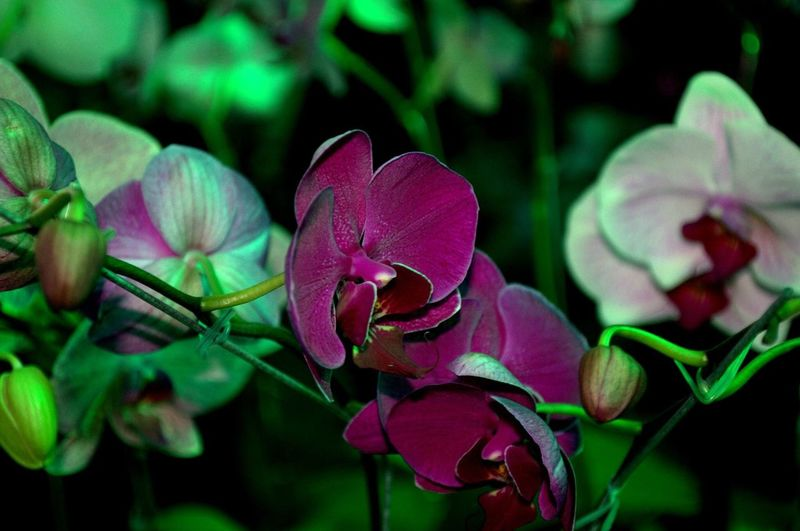 Mixed orchids.