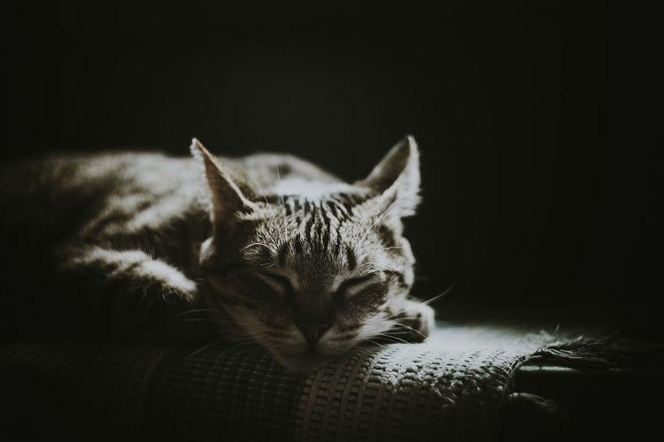 Tzina Cat