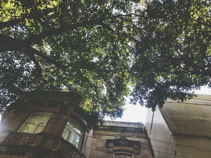 Architecture Historic No People Architectural Column Tree Trunk Directly Below Building Exterior Sky Branch Built Structure Tall - High Outdoors Tree Architectural Feature Tall History 😍😌😊