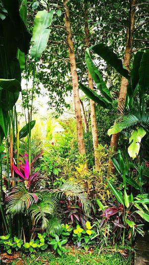 Moksha Boutique Resort Tree Flower Grass Plant
