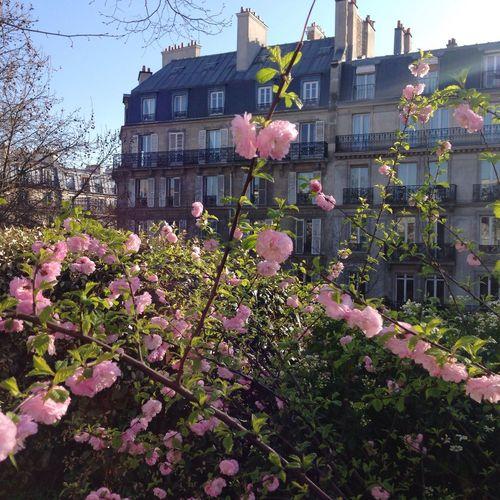 Paris Promenade