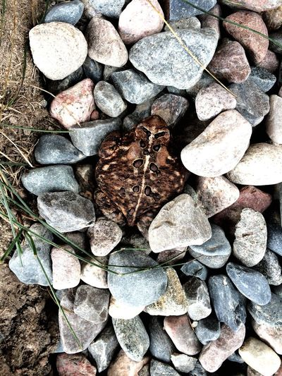 Found a Toad chilling on some warm Stones :) Northern Ontario POV Of Dee Nature