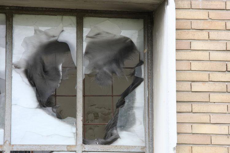 Briks Broken Glass Broken Heart Broken Window Heart Ruins Ruins Architecture Wall Window