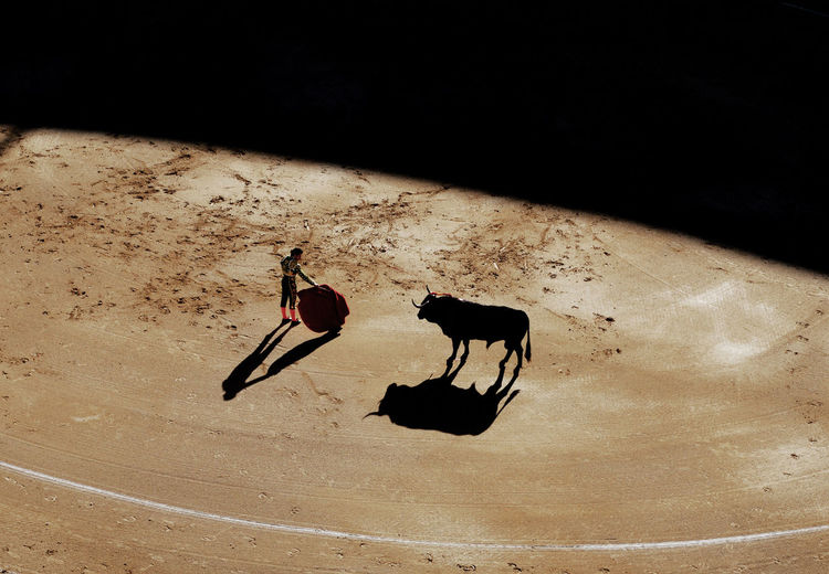 High Angle View Of Matador By Bull In Ring During Sunny Day