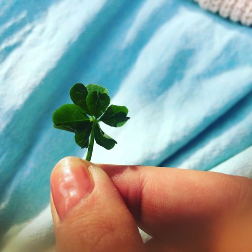 Human Hand Human Body Part Human Finger One Person Personal Perspective Leaf Real People Holding Unrecognizable Person Close-up Green Color Day Outdoors Nature Fragility Women Fingernail Beauty In Nature People Adult Clover Six Leaf Clover Luck