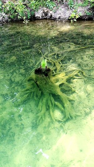 Outdoors Water Day Nature Plant No People Beauty In Nature Sea Tree UnderSea Close-up Summertime Summersville Lake Beauty In Nature