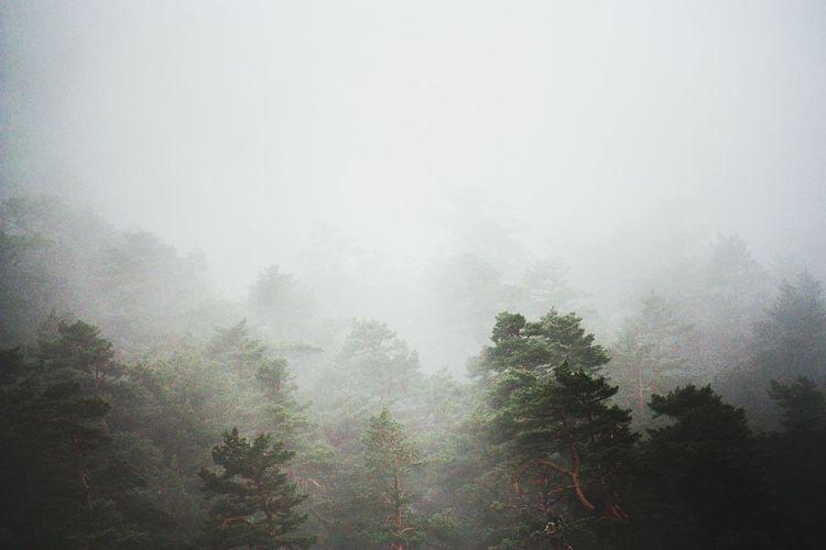 Trees against sky during rainy season