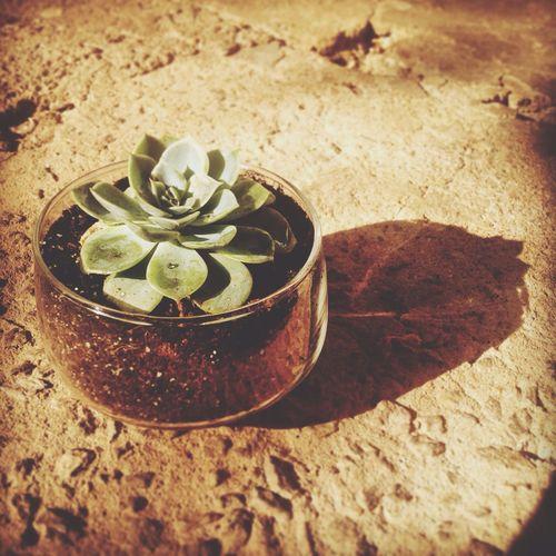 Cactus Suculentas Y Cactus Nature Plants 🌱 Green Life