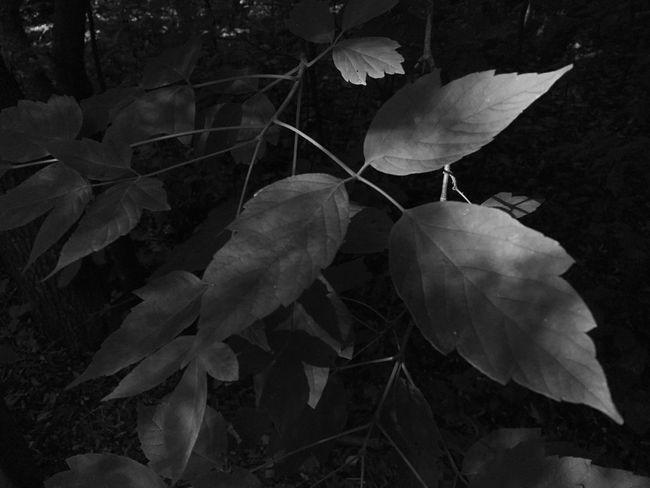 Nature Blackandwhite Hugging A Tree