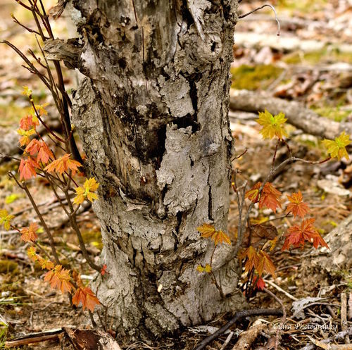 Close-up Forest Growth Nature Outdoors Tree Tree Trunk