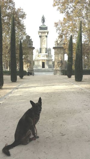 Dog BelgianShepherd Jara Madrid Pets City