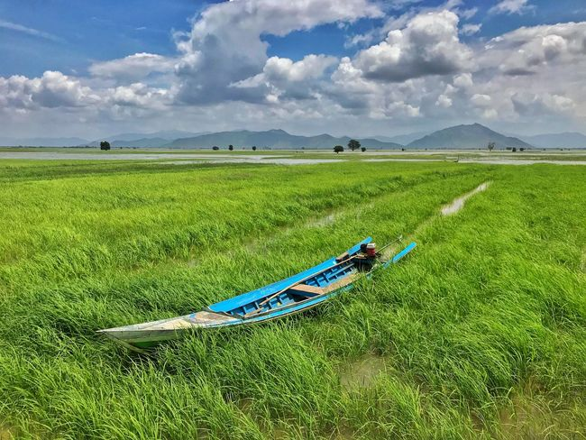 Plant Sky Grass Land Nature Day Transportation Cloud - Sky Green Color Environment Beauty In Nature Landscape