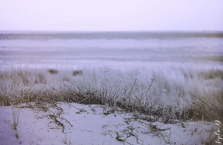 Bout perdu Nature Tranquil Scene Tranquility Landscape Beauty In Nature Outdoors Water Sea Beach Monochrome