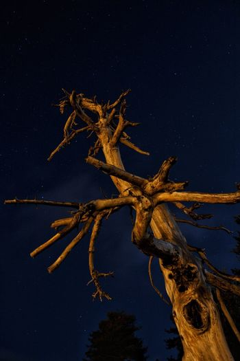 Low angle view of driftwood on tree against sky at night