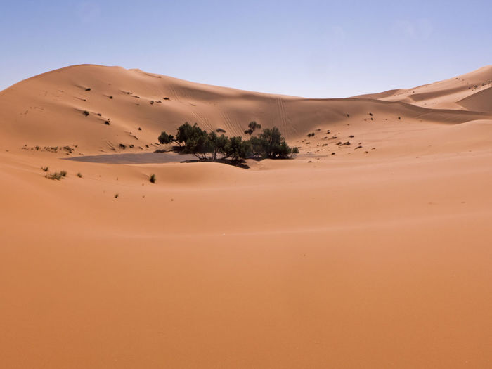 The Sahara Desert at its best. Fascinating desert landscape in the south of Morocco Erg Chebbi Morocco Sahara Land Sand Sand Dune Desert Climate Arid Climate Scenics - Nature Landscape Africa Pattern Merzouga Environment Tranquil Scene Physical Geography Atmospheric Semi-arid Remote Tranquility Non-urban Scene Beauty In Nature Nature Clear Sky