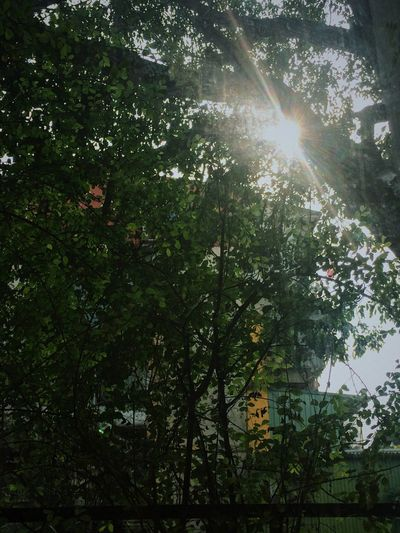 Hanoi Morning Sunlight Nature Low Angle View No People Tree Sunbeam Lens Flare