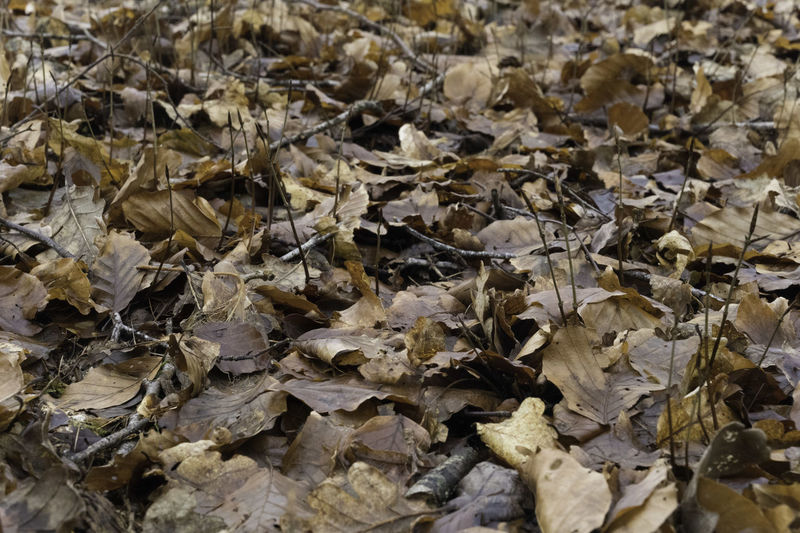 Full frame shot of dried leaves