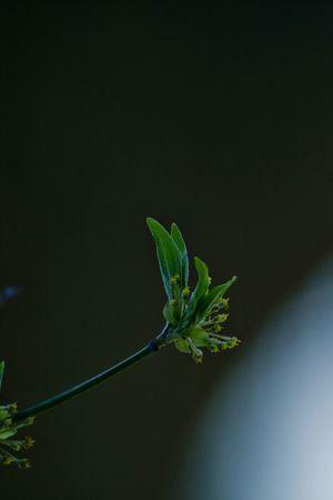 Grün Blatt Frühling Frühlingserwachen Frühlingsgefühle Frühlingsanfang Endlich Frühling